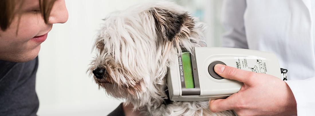 Veterinario con un lector de chips de perro