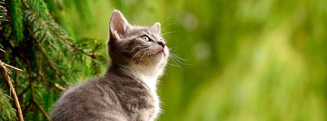 Gato sentado mirando al cielo