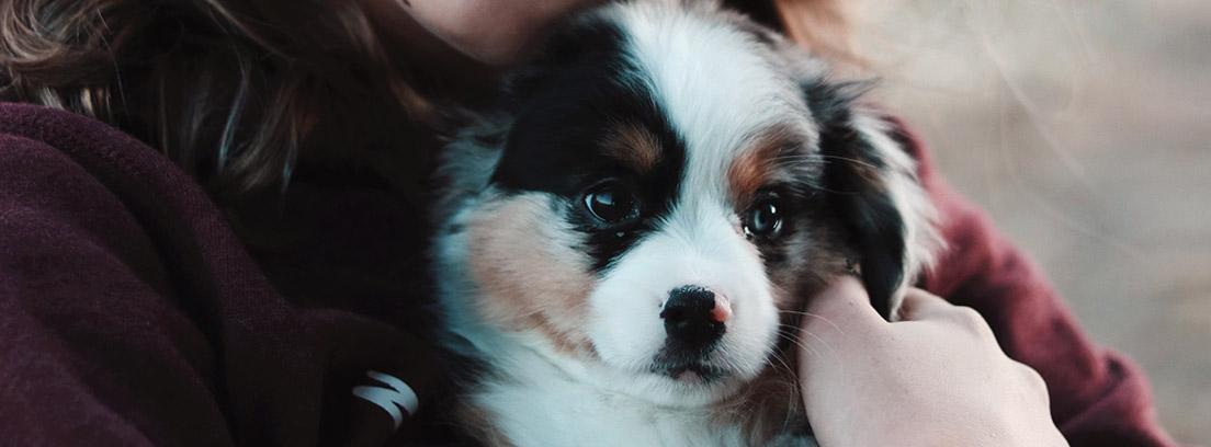 Cachorro de perro pequeño entre los brazos de una persona