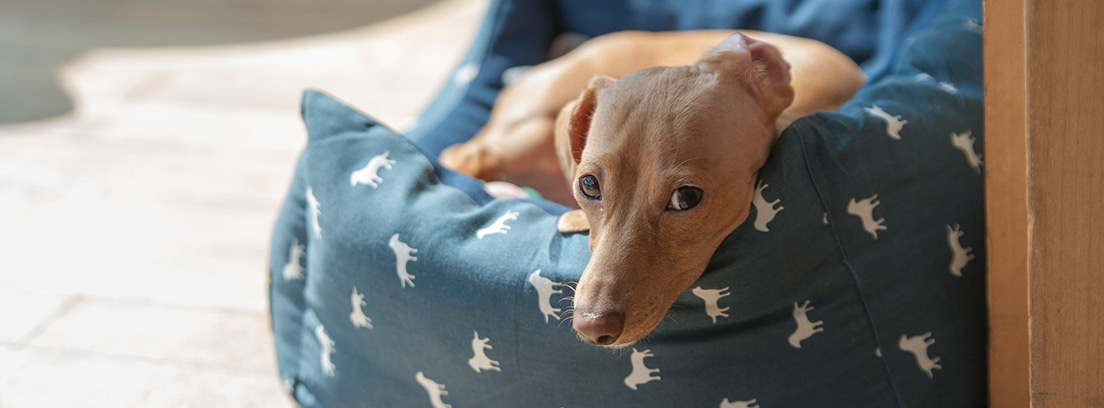 Perro tumbado en una cama para mascotas