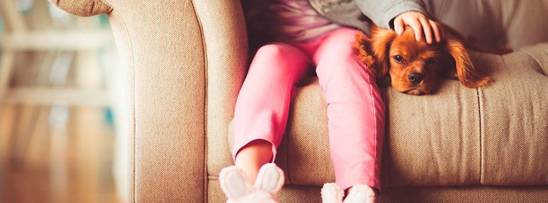 Niña y perro sentados en un sofá