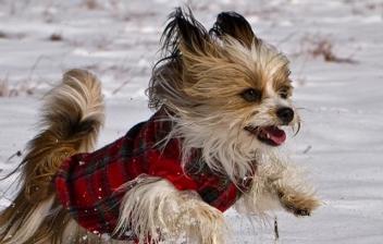 Perro pequeño abrigado corriendo por la nieve