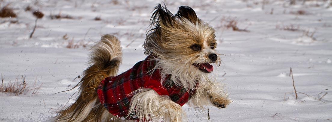 Cómo proteger a tu perro en la nieve