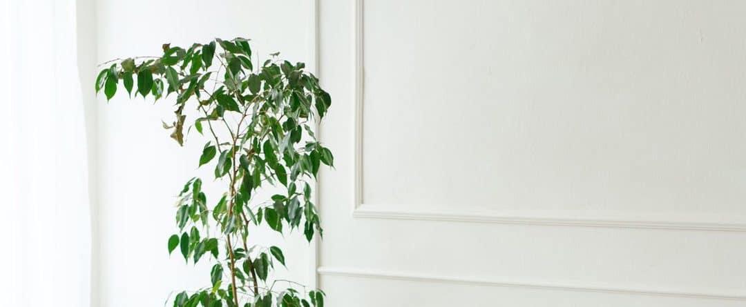 Molduras en las paredes del hogar. Ideas y materiales