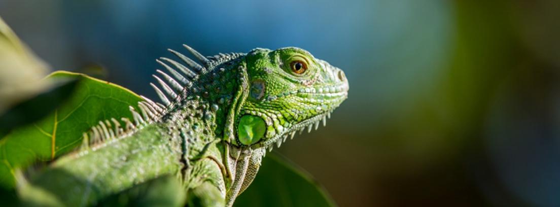 Adoptar animales exóticos: licencias y permisos