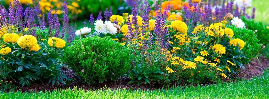 Varias flores en un jardín