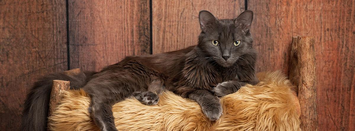 Gato azul ruso tumbado sobre un calefactor
