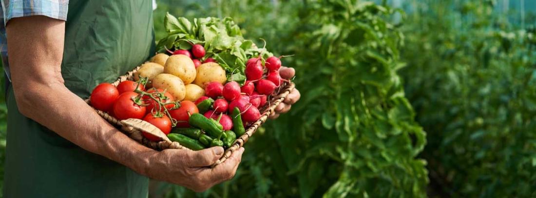 cesta ecológica con verduras