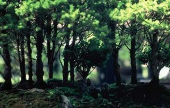 Bosque de árboles en bandeja compuesto por diferentes bosáis.