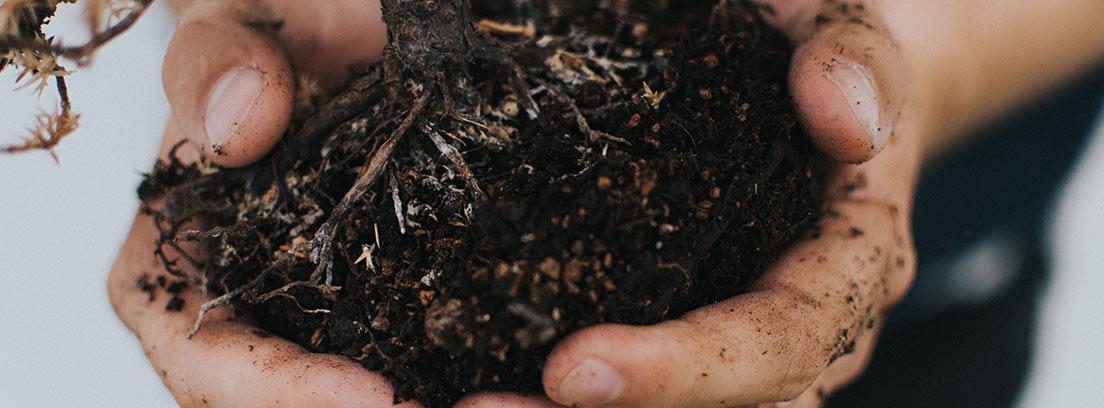 Manos sujetan tierra y raíces de un bonsái.