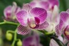 Orquídeas moradas.