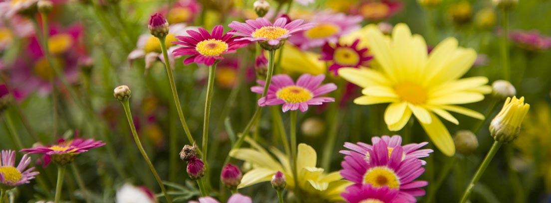 Flores baratas para el jardín