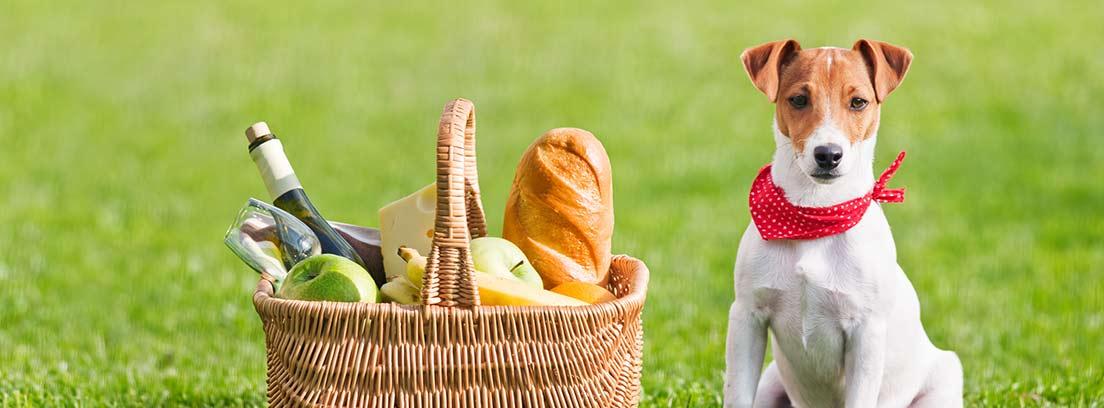 Perro de raza Jack Russel sentado en el césped junto a cesta de mimbre con pan, frutas y una botella de cristal.
