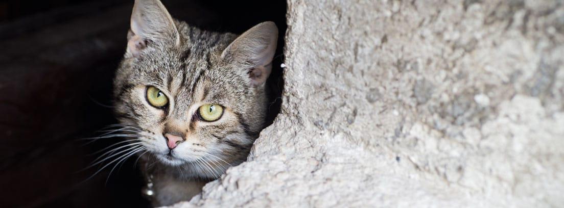 Gato escondido en una pared