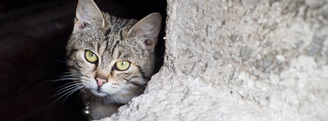 Consejos para encontrar a un gato perdido