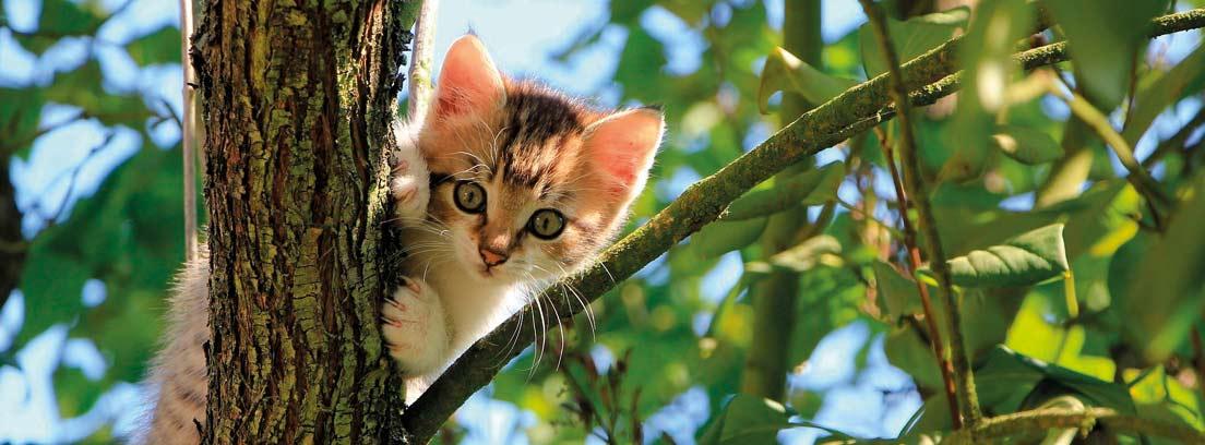 Gatito subido a la rama de un árbol