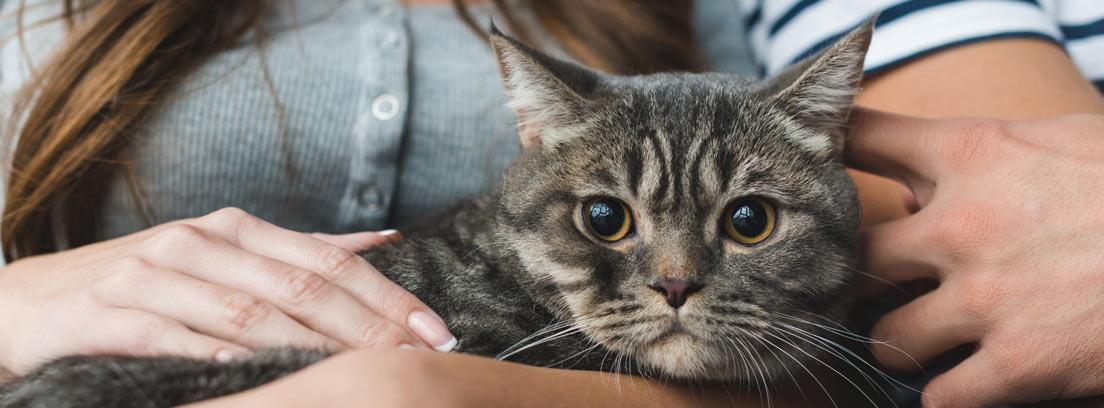 gato atigrado con ojos claros mirando fijamente a un punto.