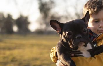 Niño con abrigo amarillo y un Bulldog francés negro en brazos.