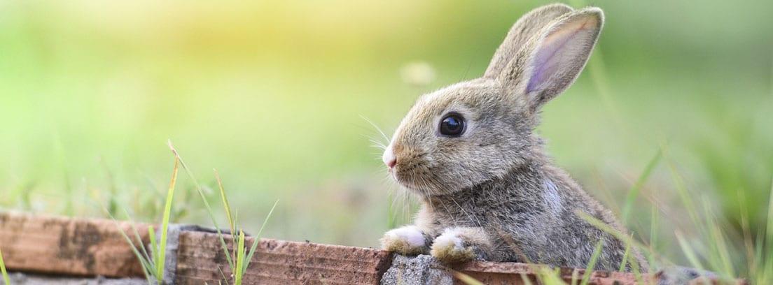 Conejo gris con las orejas para arriba en el campo