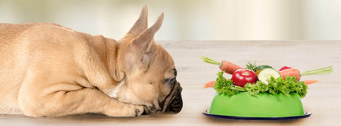 Perro de raza Bulldog francés tumbado junto a yn comedero relleno con verduras.