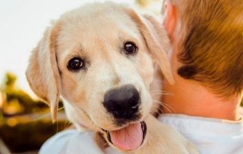 Niño de espaldas cogiendo en brazos un perro