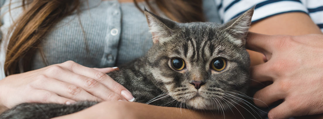 Gato marrón en los brazos de una pareja