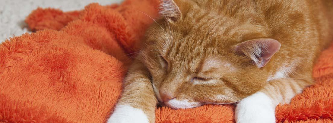 Gato rojizo durmiendo sobre una manta naranja.