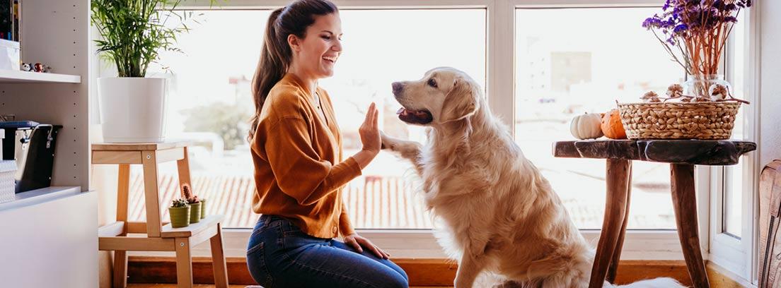 Perro de raza Golden Retriever dándole la pata a su dueña.