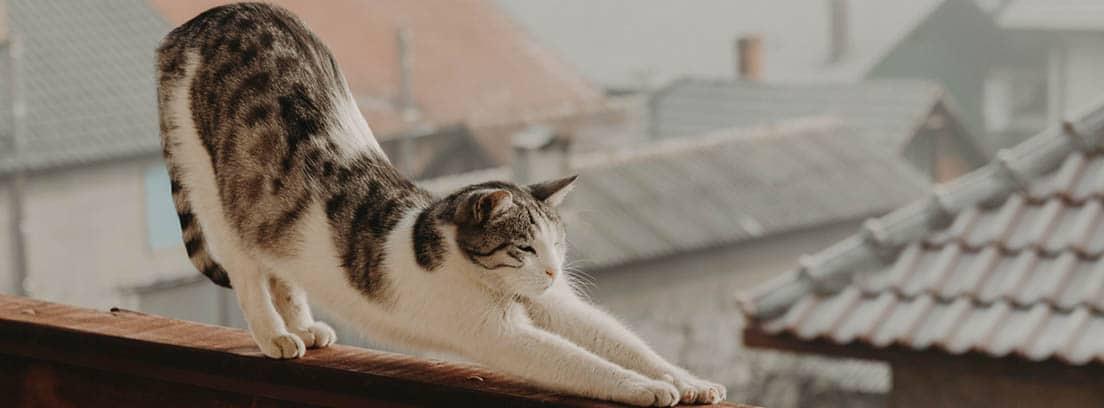 Gato atigrado se estira con unos tejados de fondo.