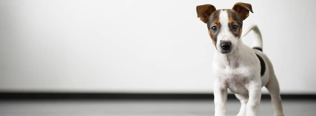 Cachorro de perro en una sala