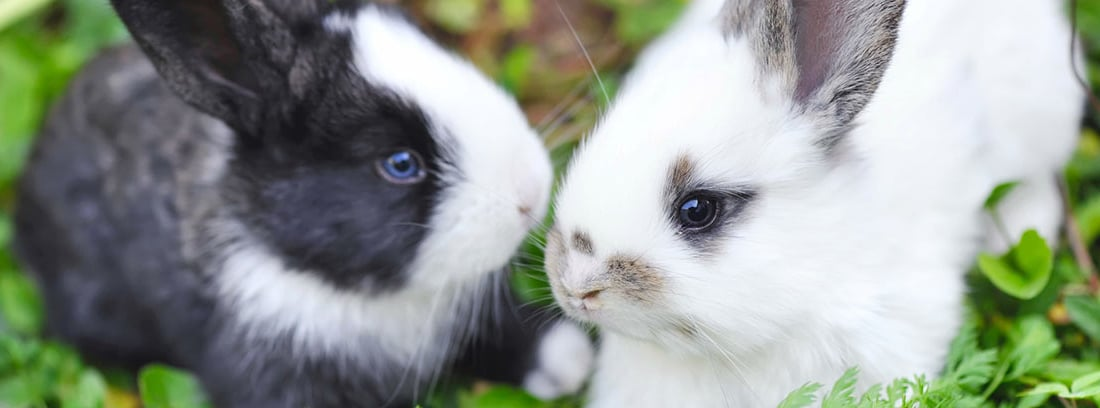 dos conejos bebés