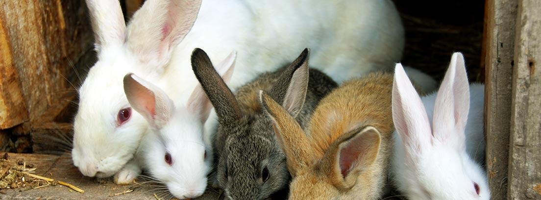 imagen de 5 conejos comiendo