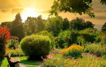 Un banco junto a unos arbustos y setos de jardín