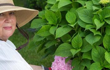 Mujer cuidando hortensias en un jardín