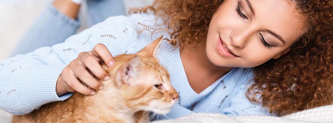 Enfermedades de la piel y del pelo del gato