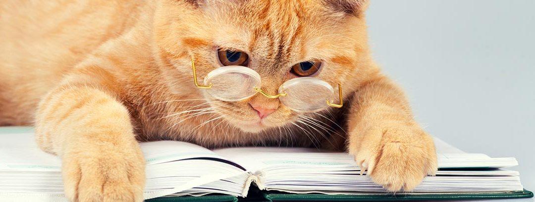 ¿Cuántos años vive un gato?