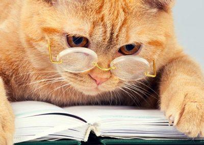 Gato atigrado con unas gafas de ver puestas, recostado sobre un libro.