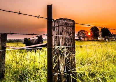 terreno de campo con cercado eléctrico