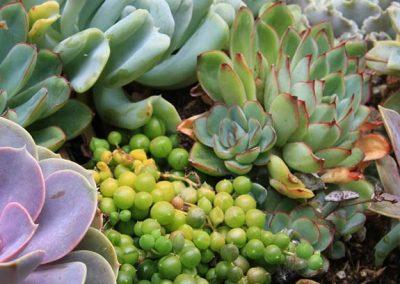 Varias plantas crasas en un jardín