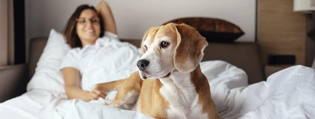 Cómo enseñar a un perro a dormir en su cama