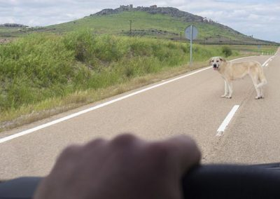 perro cruzando la carretera mientras se acerca un coche.