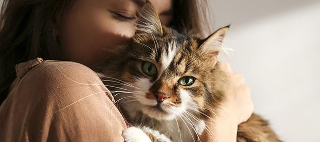 Cuidados de gatos