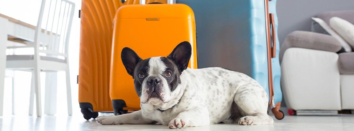 viajar con mascota en Europa