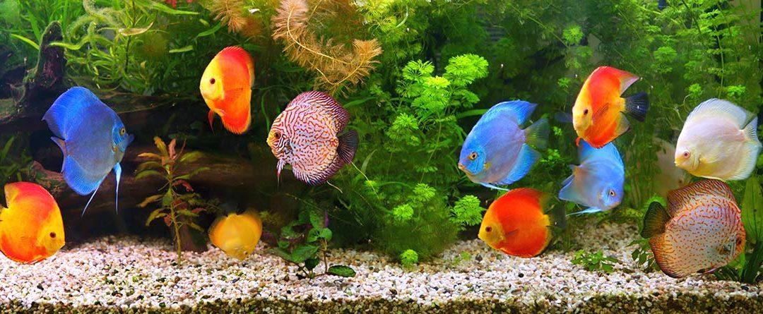 ¿Cómo elegir un acuario?