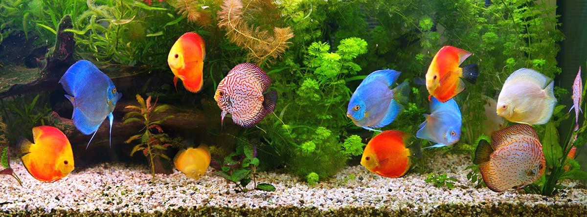 Acuario lleno de peces de colores.