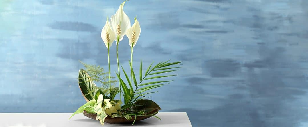 Spathiphyllum: sus cuidados y recomendaciones
