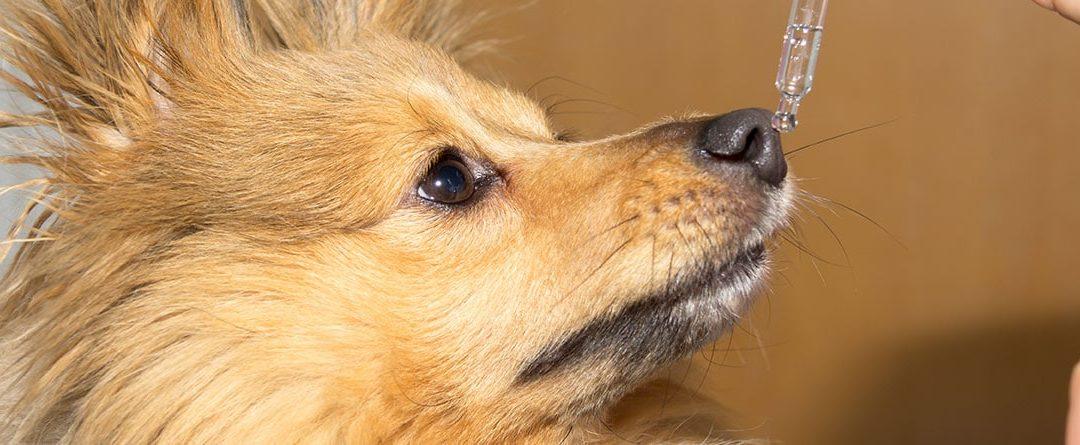 ¿Cuándo dar vitaminas o antibióticos a nuestras mascotas?