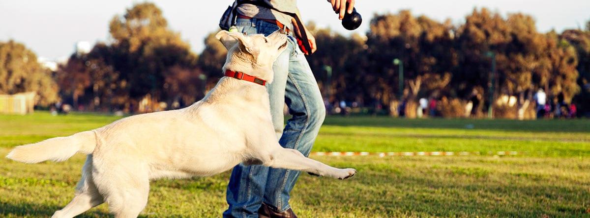 un perro y un adiestrador canino