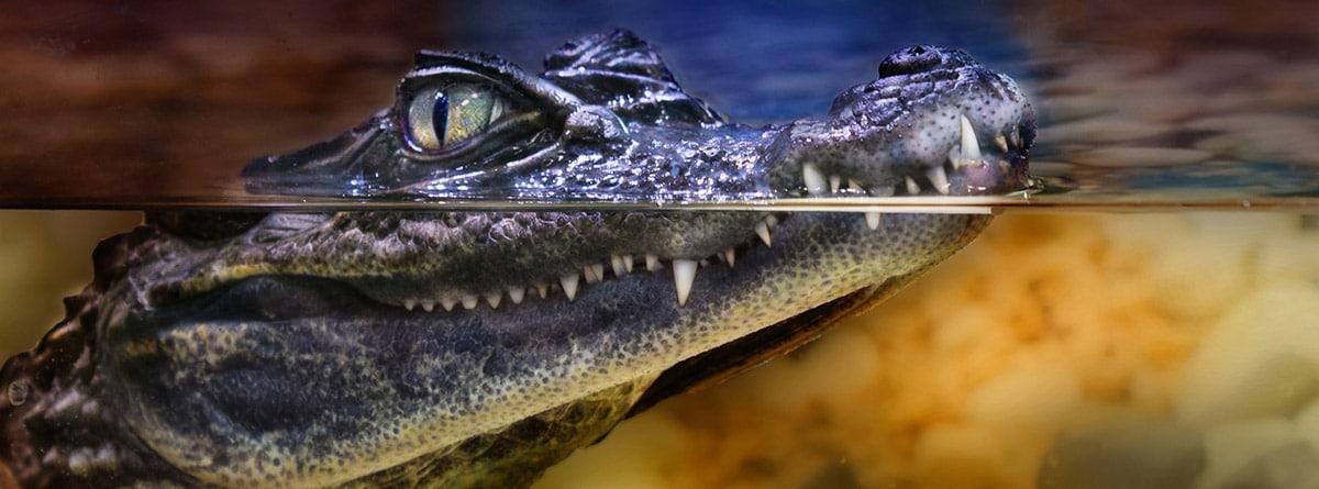 Reptil en un terrario