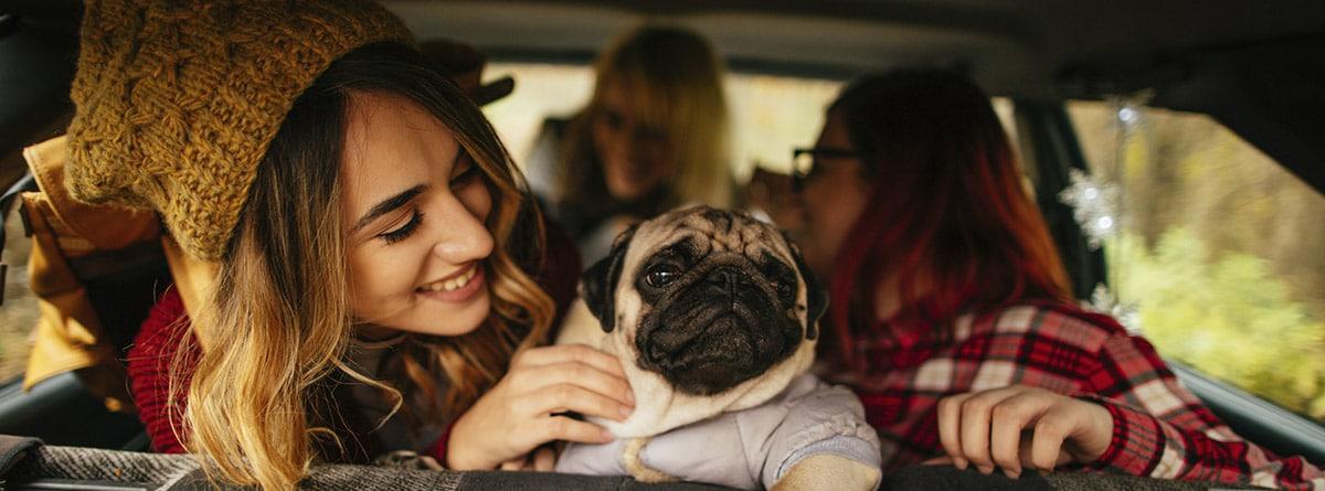 Perro de raza carlino en el interior de un coche con tres chicas.